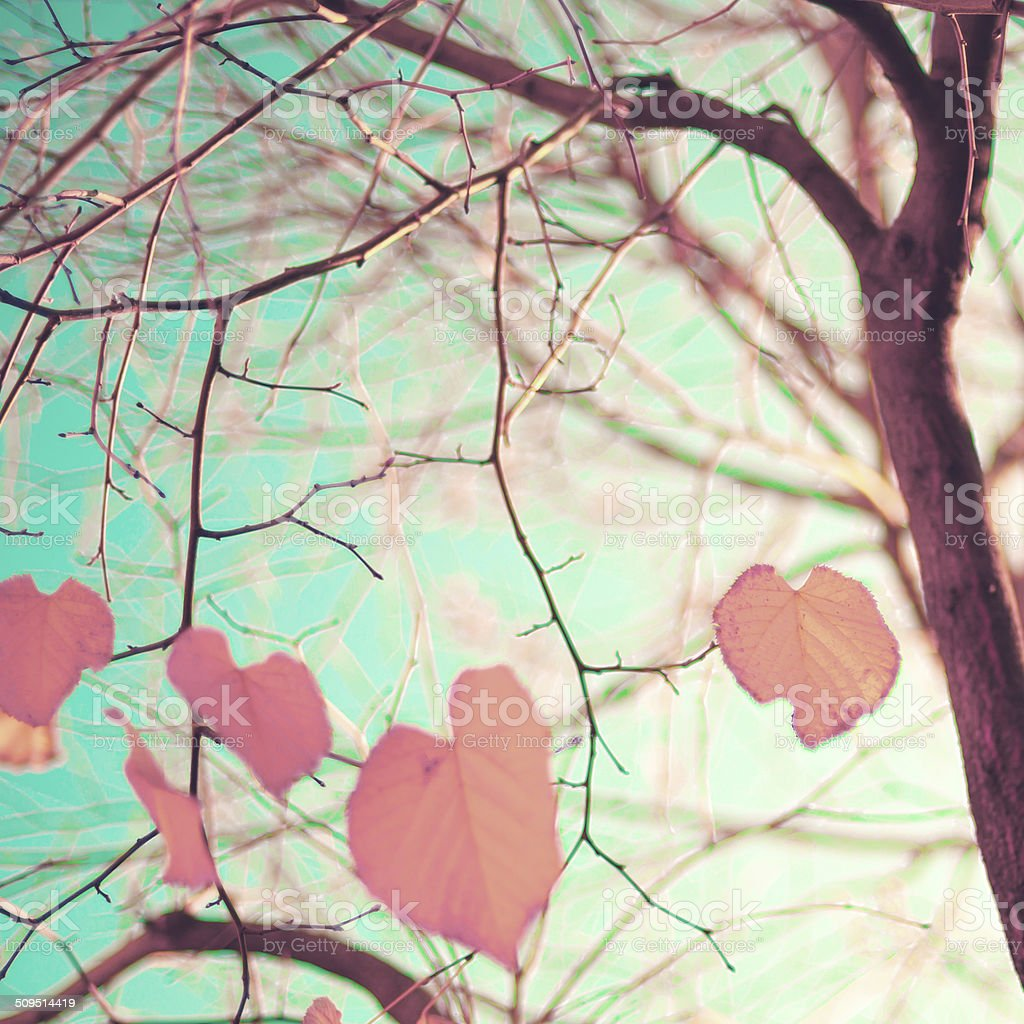 Pastel Heart-shaped autumn leaves stock photo