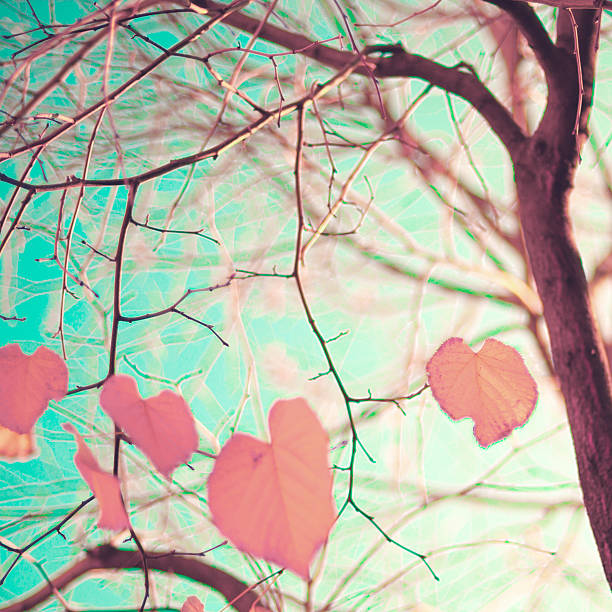 pastel heart-shaped autumn leaves - styles stock photos and pictures