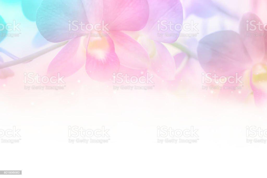 Pastell Orchidee Blume blüht mit weißen Textfreiraum – Foto