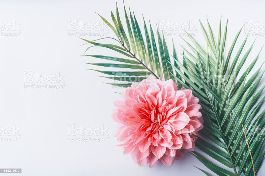 Pastel pink flower and tropical palm leaves on white desktop background, top view stock photo