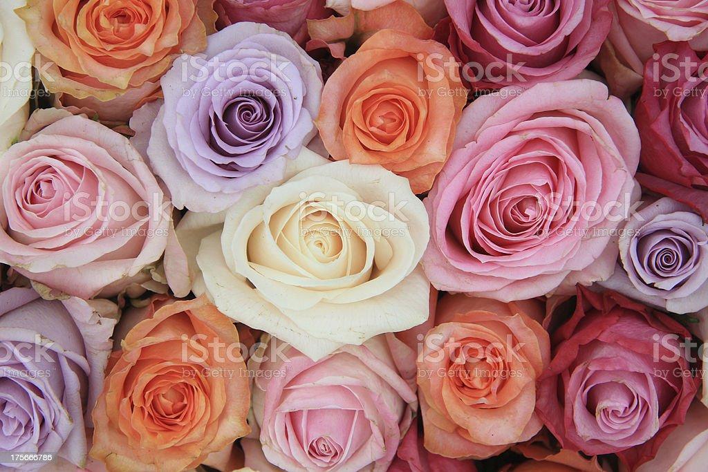 Pastel rose wedding flowers royalty-free stock photo