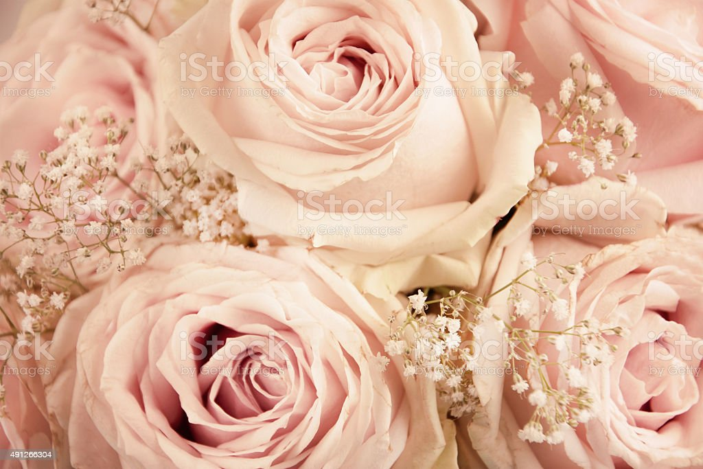 Pastel Roses Background Stock Photo - Download Image Now - iStock