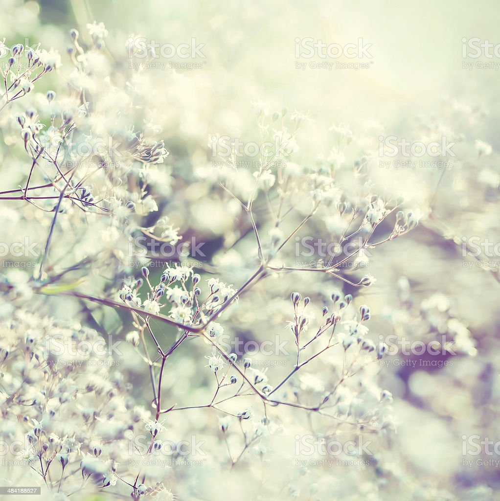 Pastel toned flowers stock photo
