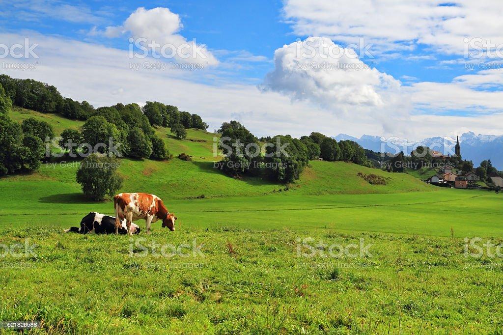 Pastorale in Provence, France stock photo