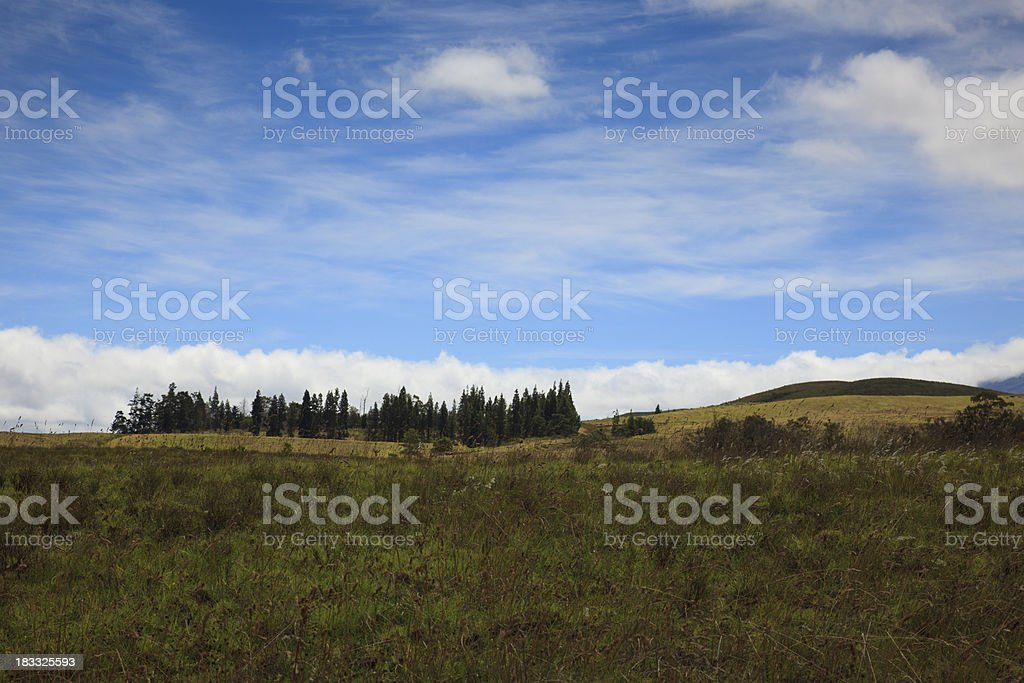 Pasture and Forest in Kohala Hawaii royalty-free stock photo