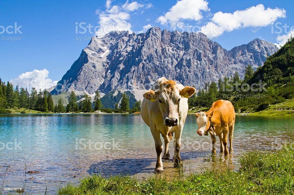 Pasture idyll on Seeebensee lake stock photo
