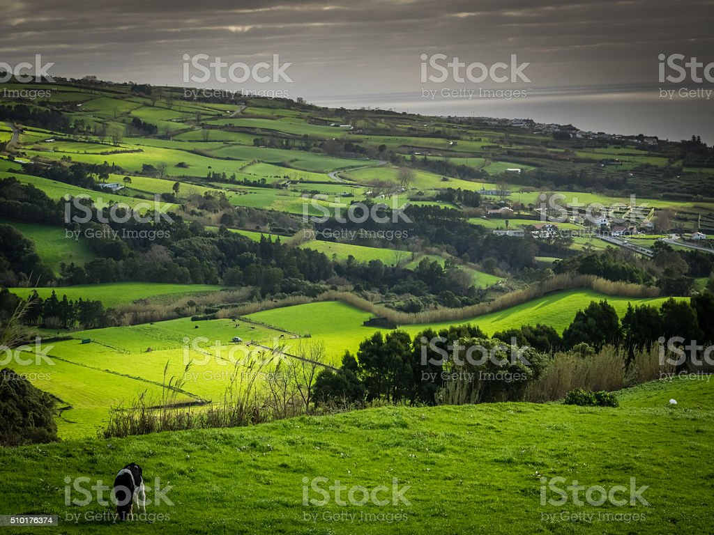 Pasture in Sao Miguel stock photo