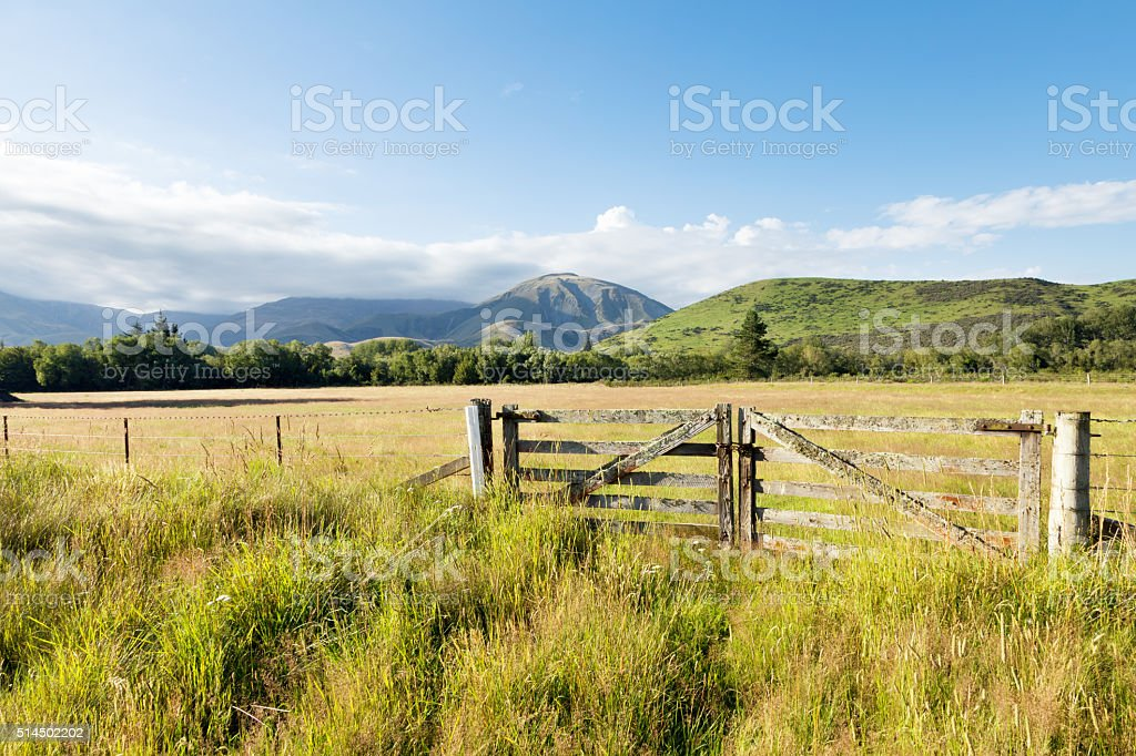 pasture in summer sunny day in New Zealand stock photo