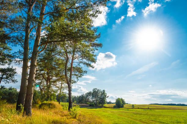 여름에서 숲과 소나무와 백라이트에서 목장 - 브란덴부르크 주 뉴스 사진 이미지