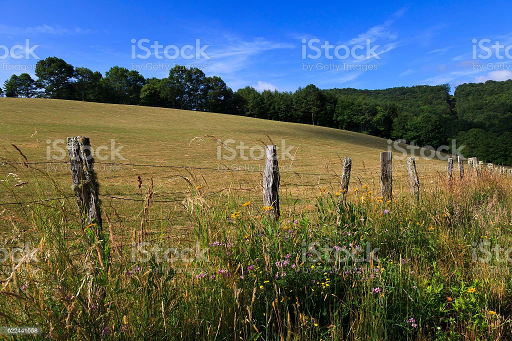 Pasture in the Mountains stock photo