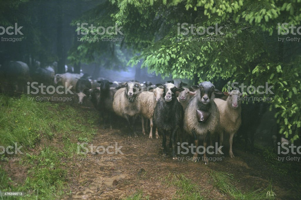 Pasture in the rain royalty-free stock photo