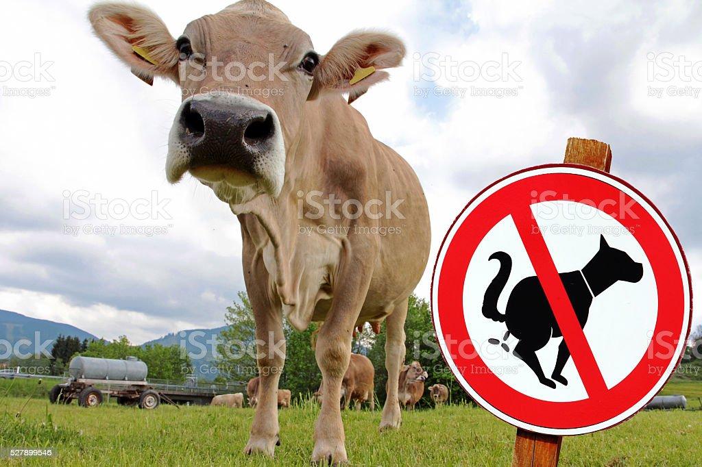 Pasture is no dog toilet stock photo