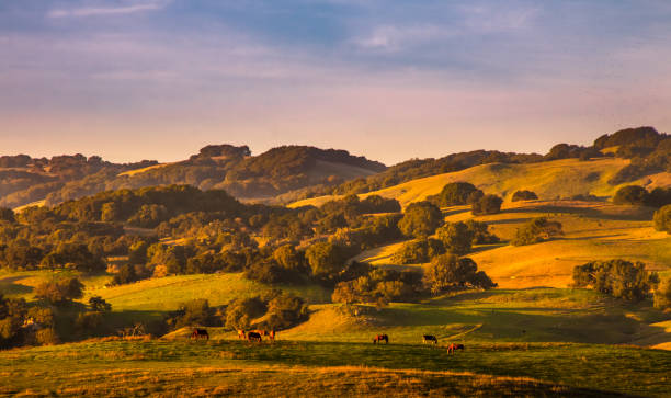 pasture, live stock and hills - hill stock pictures, royalty-free photos & images