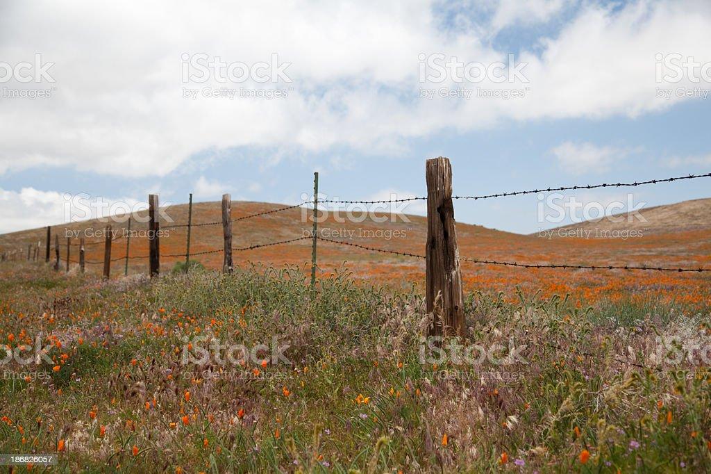 pasture royalty-free stock photo