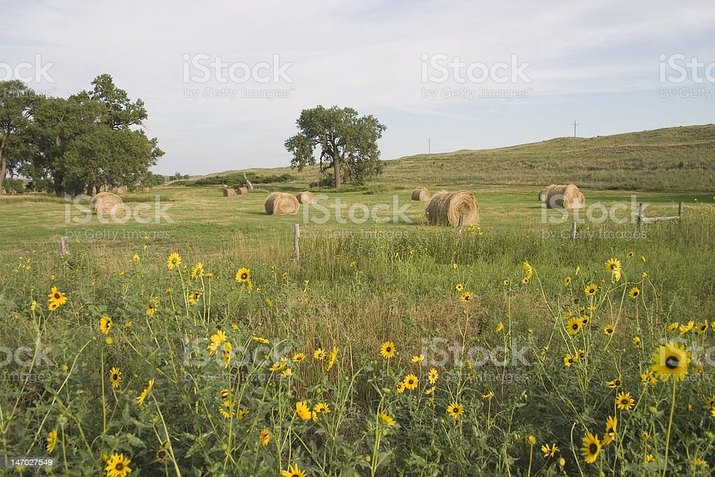 Pasture with flowers royalty-free stock photo