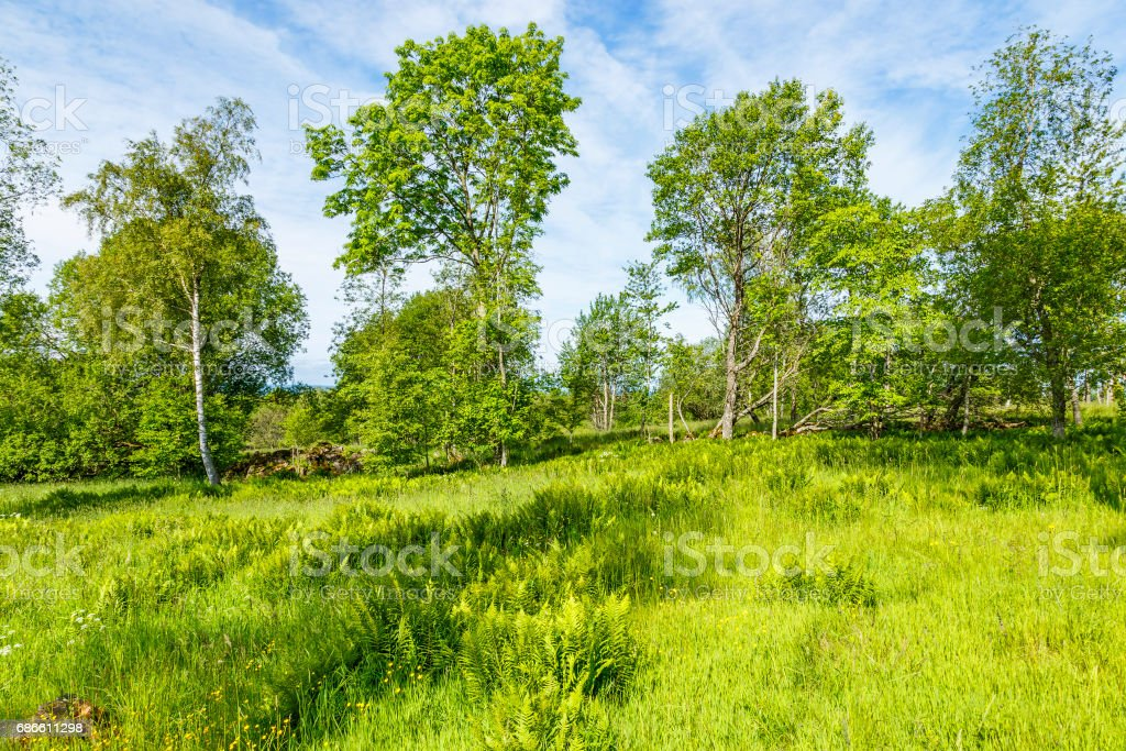 Pasture with lush foliage trees in summer royalty-free stock photo