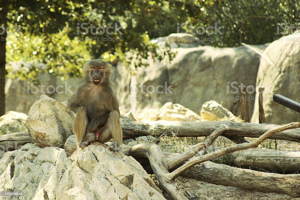 Mono Patas de estar foto de stock libre de derechos