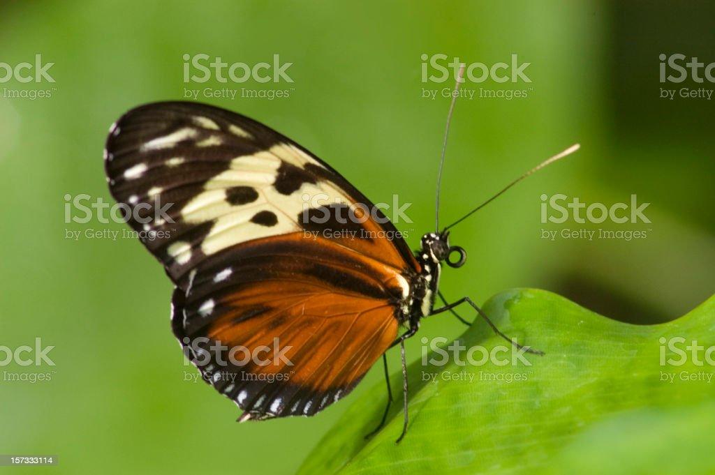 Patch Butterfly stock photo