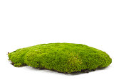 A patch of green moss on a white background