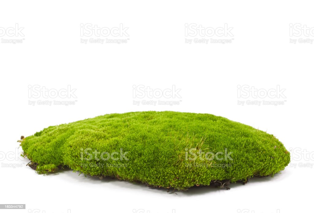 A patch of green moss on a white background stock photo