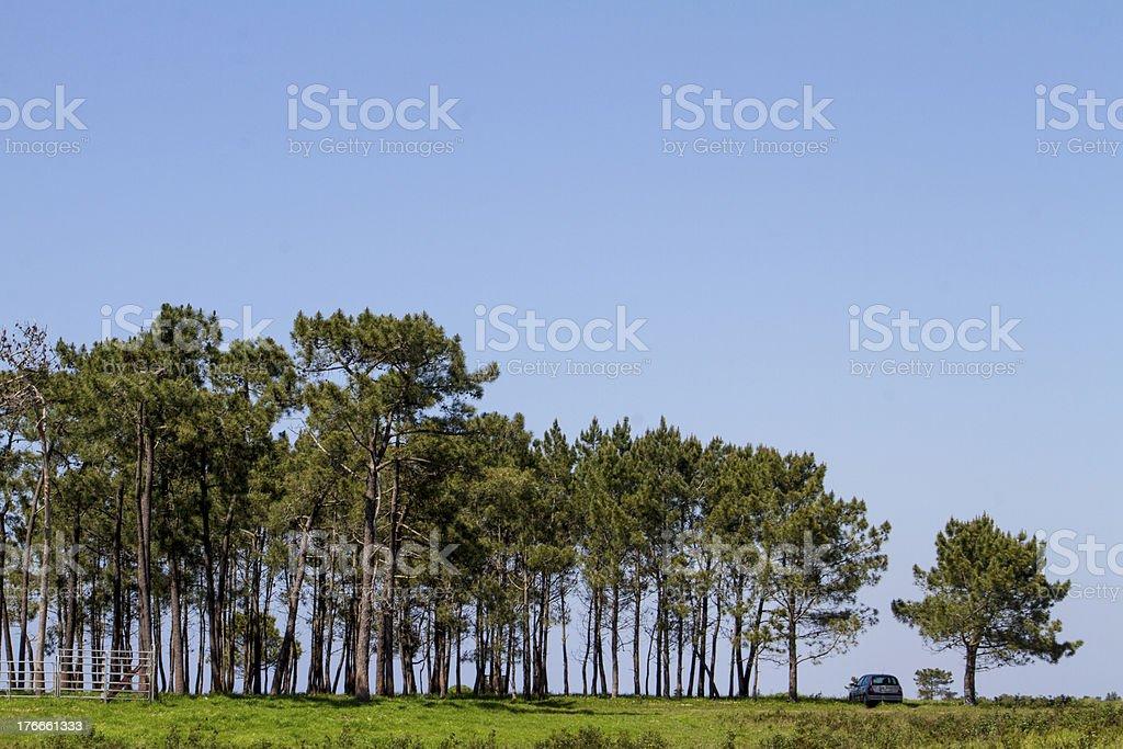 patch de árboles con lonely automóvil foto de stock libre de derechos