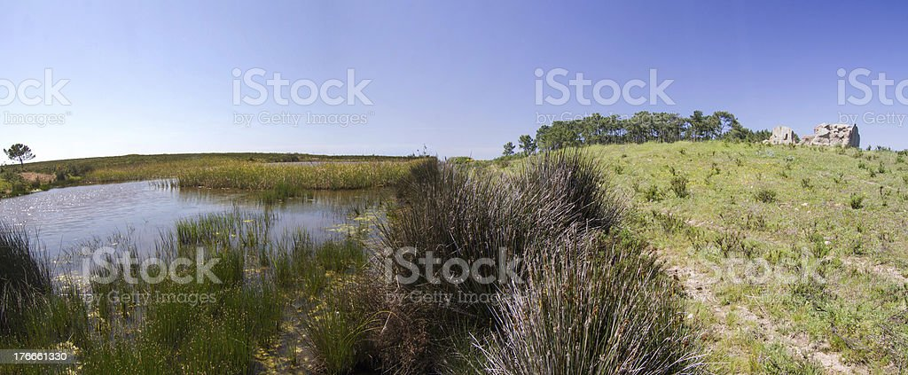 patch of trees with pond royalty-free stock photo