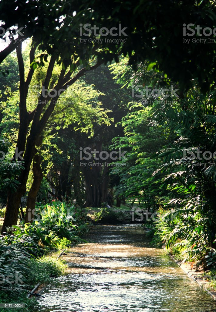 Patch through a agreen forest stock photo