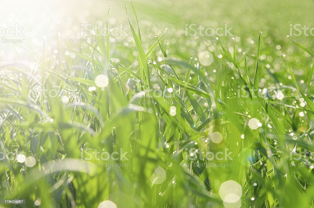 Patches of light from dew on a grass royalty-free stock photo