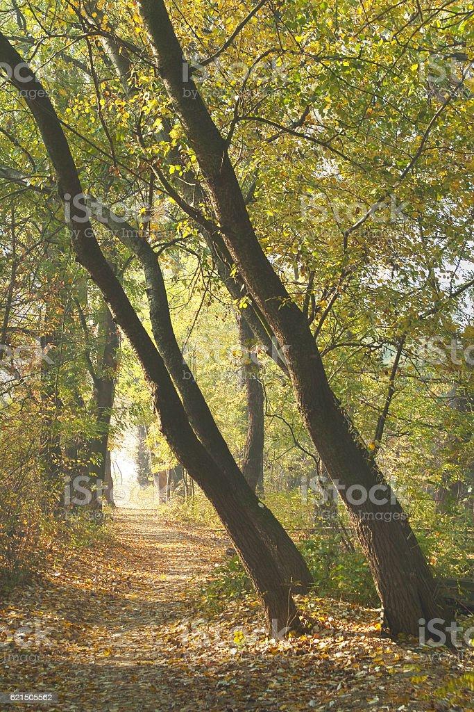 Chemin 2 photo libre de droits