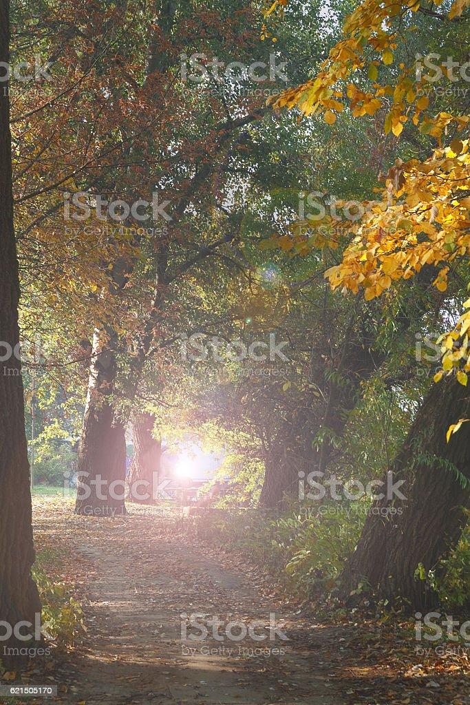 path 3 photo libre de droits