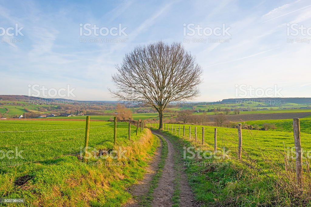 Path along a sunny hilly meadow in winter stock photo