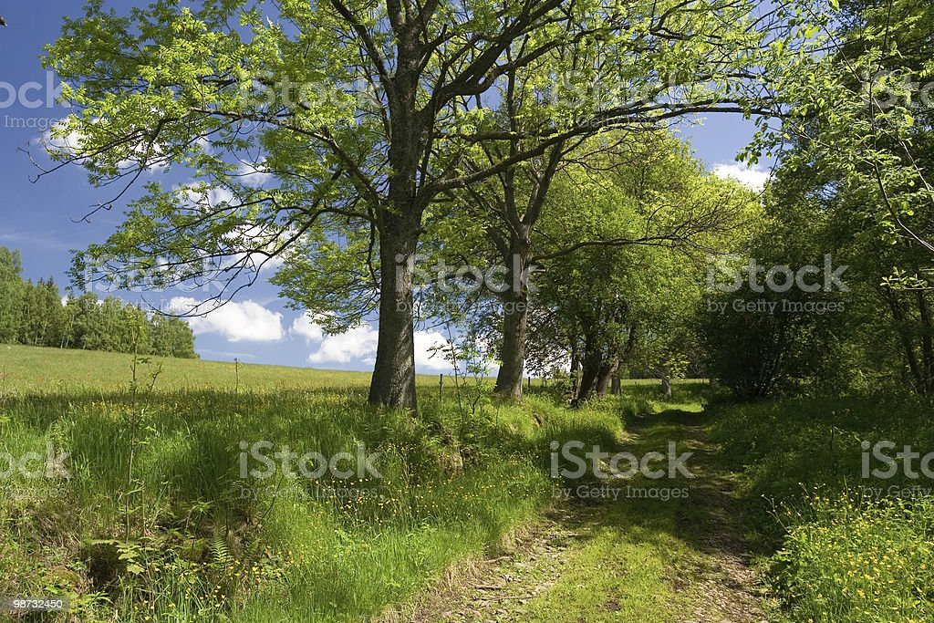 Path Along Grown Trees royalty-free stock photo