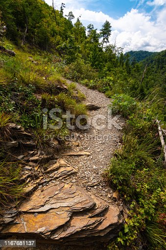 Path along the Hatcher Mountain Trail on a beautiful Summer's day.  Smoky Mountains National Park, Tennessee, USA