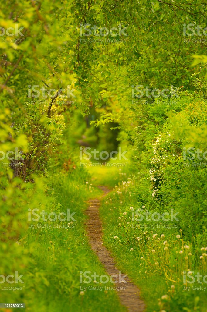 Path Along The Tree - XXXL royalty-free stock photo