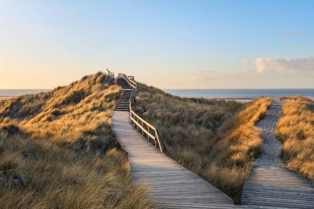 Path and stairs through the duens of Amrum stock photo