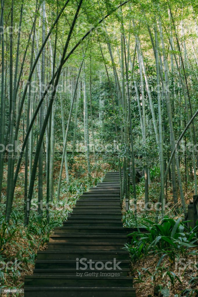 A path and stairway to dense bamboo forest stock photo