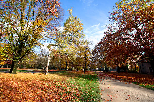 Path and trees in autumn  erlangen stock pictures, royalty-free photos & images