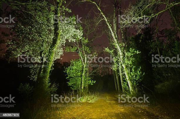 Photo of Path at night