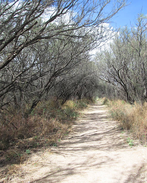 Path at San Pedro Riparian National Conservation Area stock photo