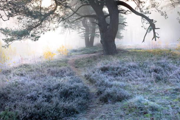 pad tussen bomen bij vorst koude herfst zonsopgang foto
