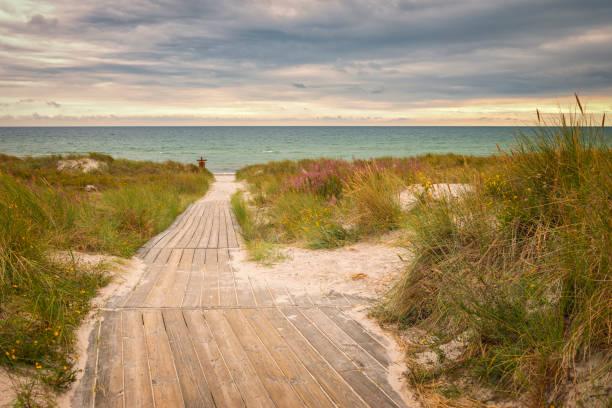 vägen ner till stranden, svensk sommar - öresundsregionen bildbanksfoton och bilder
