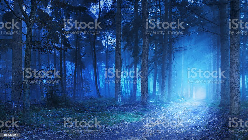 Path in a dark and foggy forest at dawn stock photo