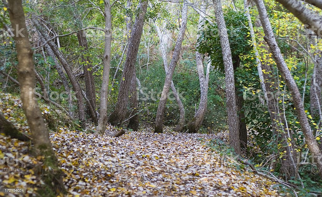 Path in a forest royalty-free stock photo
