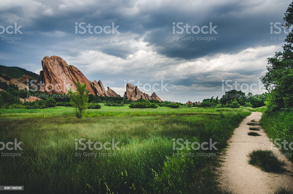 Path in a lush field on an overcast day. - foto de stock