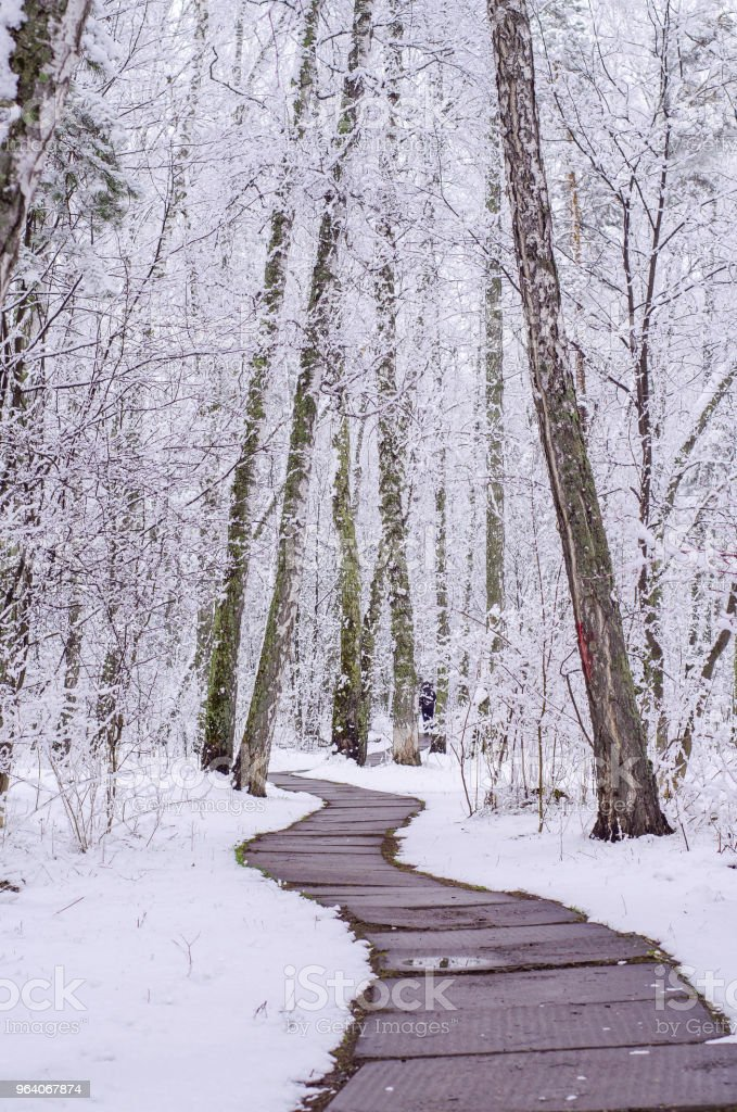 path in a snow-covered spring forest. anomalous spring. snow in May - Royalty-free Day Stock Photo