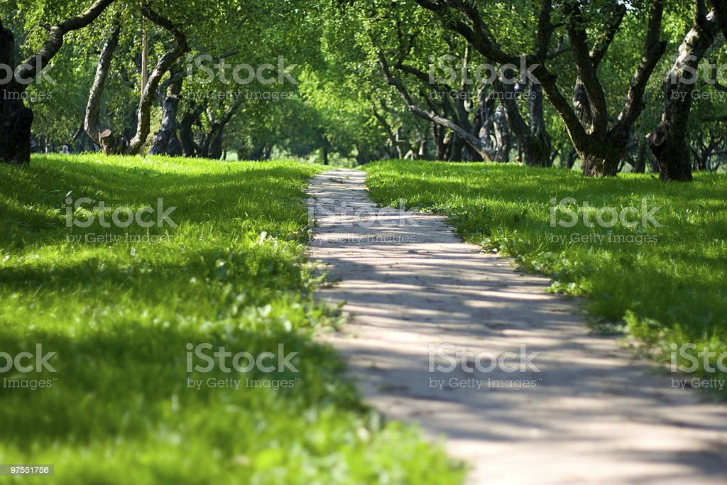 Path in apple garden royalty-free stock photo