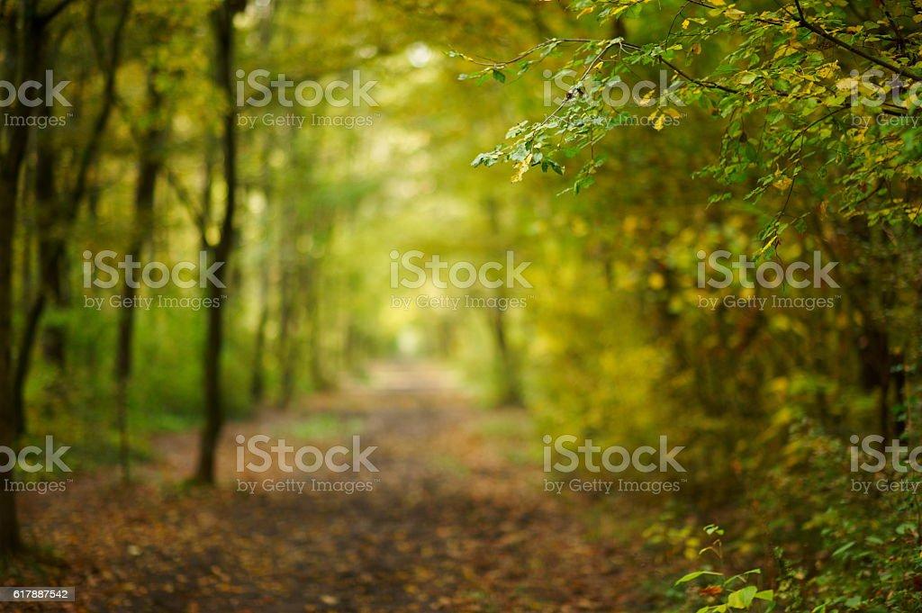 Caminho na Floresta de outono - foto de acervo