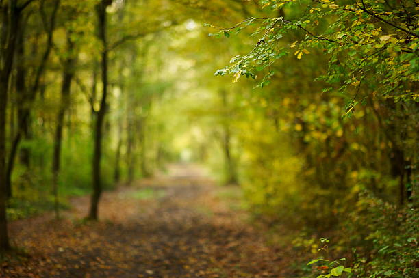 path in autumn forest - footpath stock photos and pictures