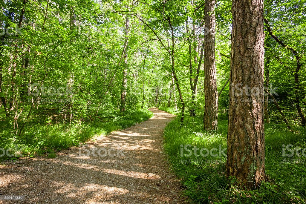 Path in beautiful green forest in summer stock photo
