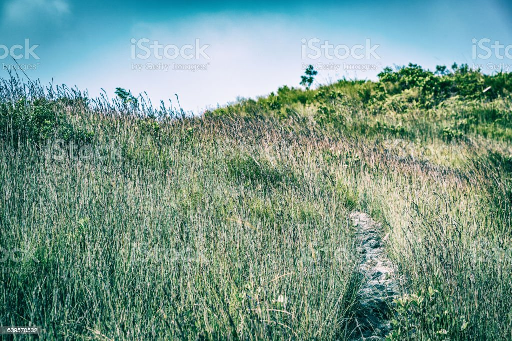 Path in Countryside stock photo